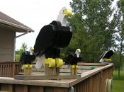 Click to enlarge image They`re easily mounted to deck railings. - Bald Eagles -